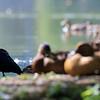 DSC_1542 summer scenes from Clove lakes_DxO