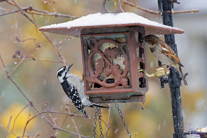 DSC_2272 backyard visitors_DxO