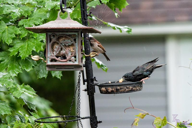DSC_3198 backyard bird feeder