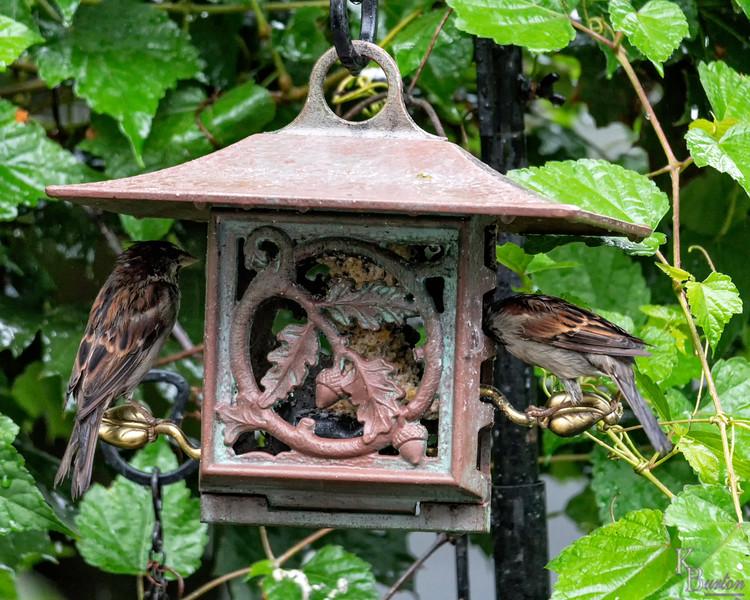 DSC_0064 backyard bird feeder