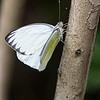 DSC_4824 scenes from butterfly gardens