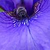 DSC_1162 honeybee