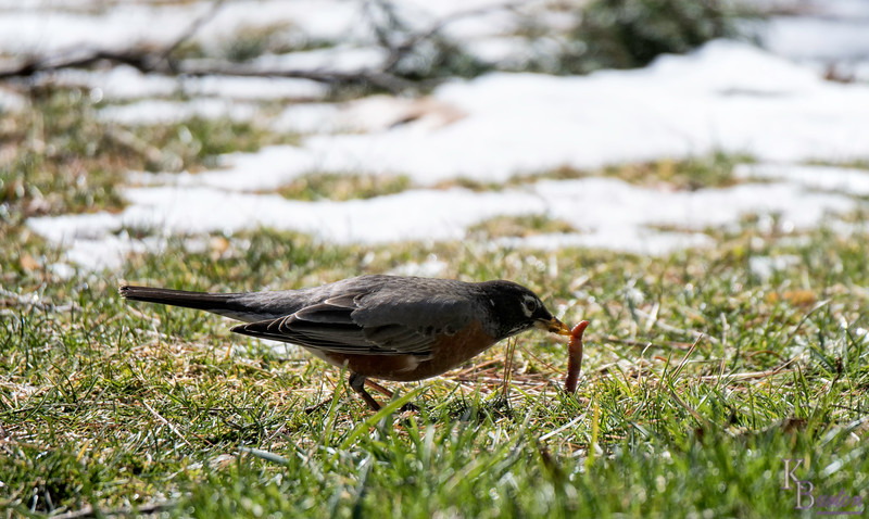 The not so early bird