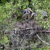 DSC_7533 heron's nest