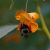 DSC_9777 hunting for nectar_DxO