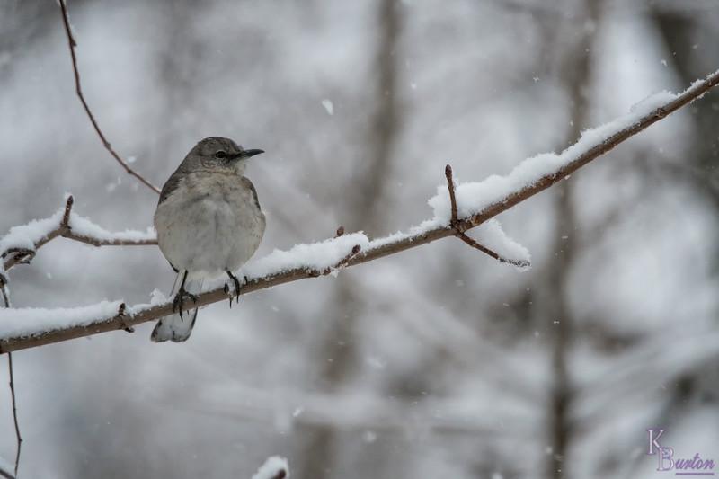 DSC_4515 winter scenes from my backyard
