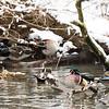DSC_1434 winter scenes from the zoo