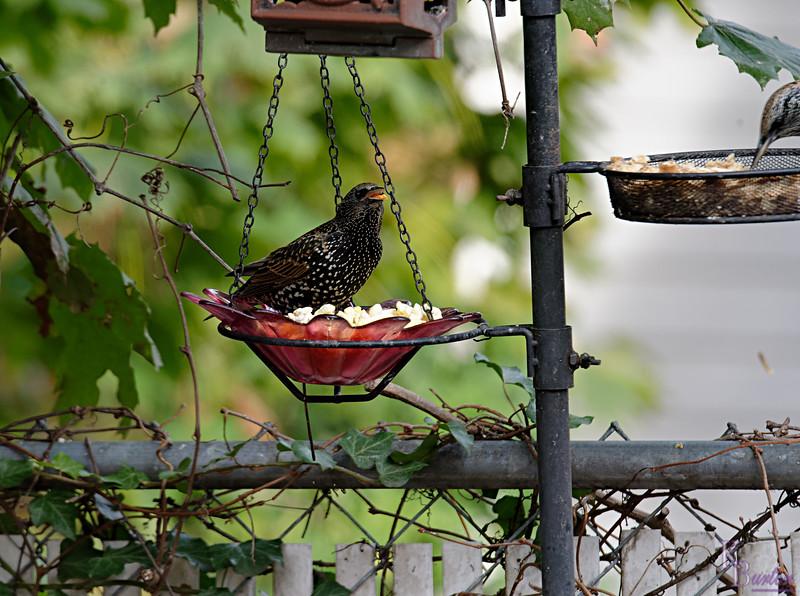 DSC_1107 backyard visitors_DxO
