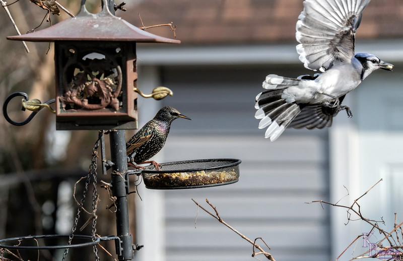 DSC_6622 backyard bird feeders
