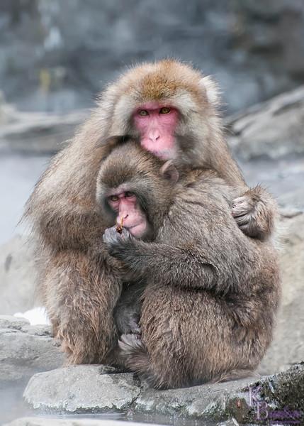 DSC_2044 snow monkeys