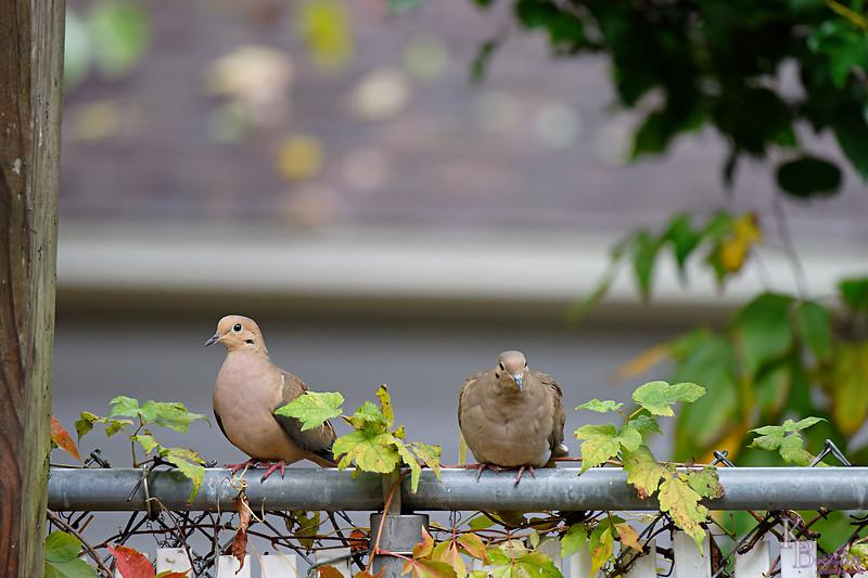 DSC_2389 backyard visitors_DxO