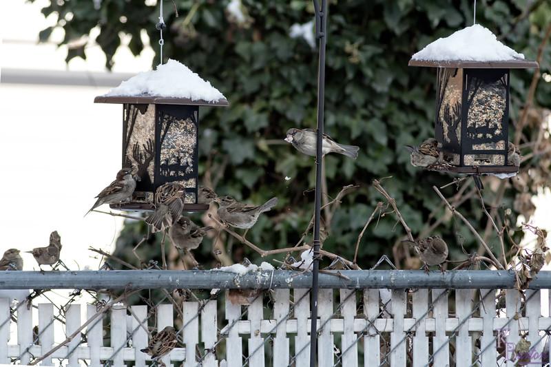 DSC_9852 backyard bird feeders