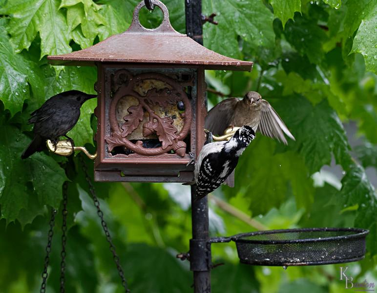 DSC_1540 backyard visitors_DxO