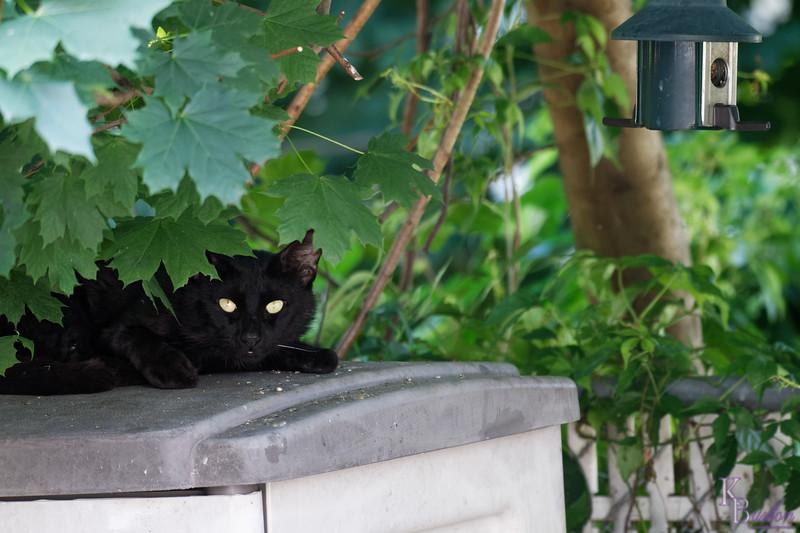 DSC_3378   hiding in the bushes_DxO