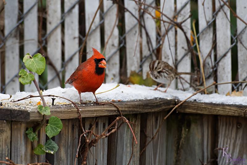 DSC_2799 backyard visitors_DxO