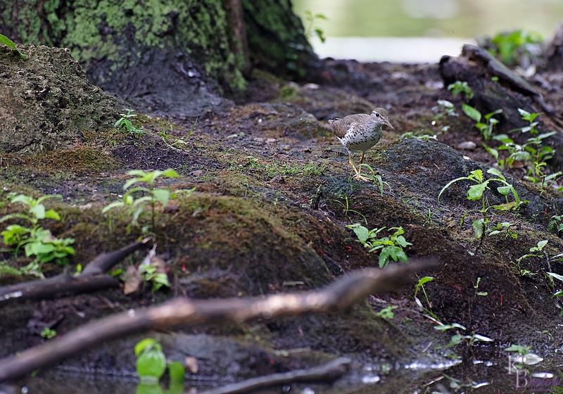 DSC_9549 rainy day at Clove lakes_DxO