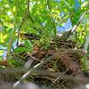 DSC_0800 robin's nest_DxO
