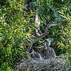DSC_8790 heron's nest