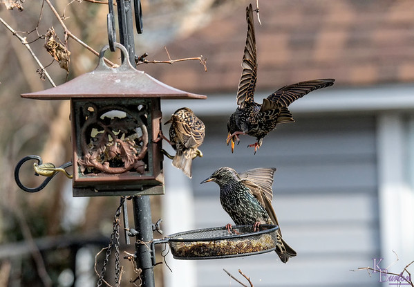 DSC_6599 backyard bird feeders