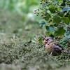 DSC_6578 feeding in the bush