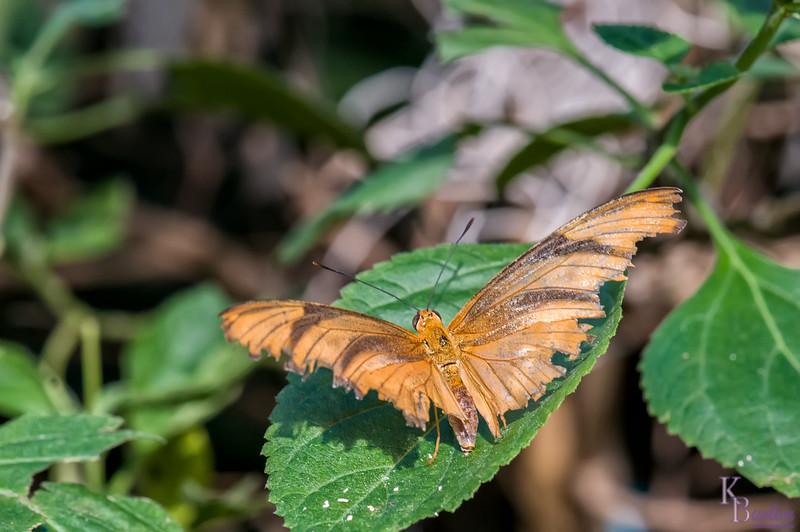DSC_7293 scenes from Butterfly Gardens