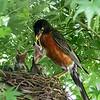 DSC_7574 robin's nest