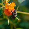 DSC_9827 hunting for nectar_DxO