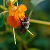 DSC_9827 hunting for nectar_DxO