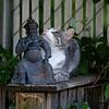 DSC_5357 backyard visitors_DxO