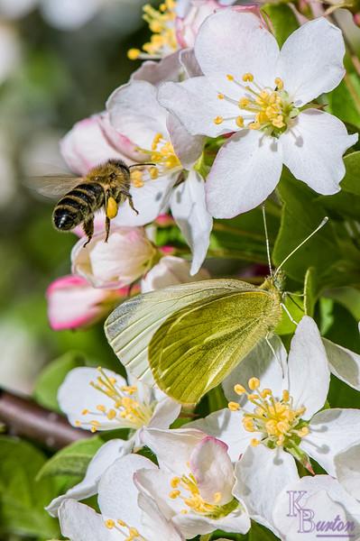 DSC_0401 spring scene at the Botanical gardens