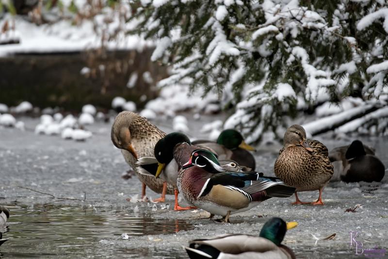 DSC_1100 winter scenes from the Bronx zoo