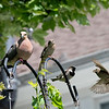DSC_3277 backyard bird feeder