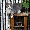 DSC_5675 sitting kitty