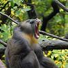 DSC_0802 baboon_DxO