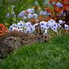 DSC_3841 bunny rabbit_DxO