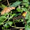 DSC_7339 scenes from Butterfly Gardens