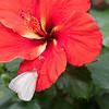 DSC_4787 scenes from butterfly gardens