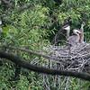 DSC_8476 baby chicks