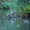 DSC_9789 summertime at Brooks lake_DxO