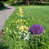 DSC_4579 roadside flowerbed