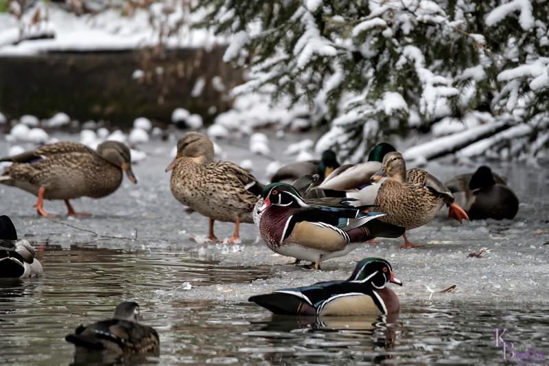 DSC_1114 winter scenes from the Bronx zoo