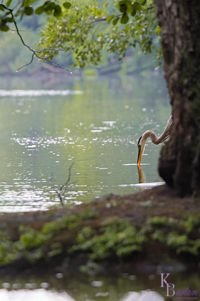 DSC_9972 rainy day at Clove lakes