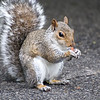 DSC_4406 Squirrel