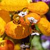 DSC_1309 greenhouse floweres of Wavehill