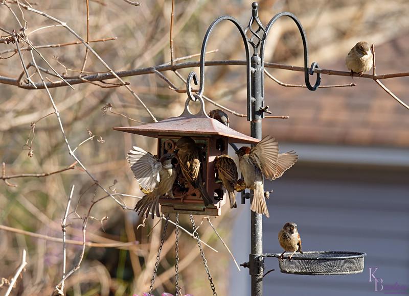DSC_2610 backyard visitors_DxO