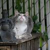 DSC_9226 bird watcher