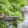 DSC_7177 bird bath
