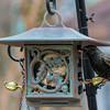 DSC_3165 starling