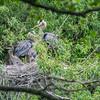 DSC_8736 heron's nest