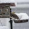 DSC_4529 winter scenes from my backyard